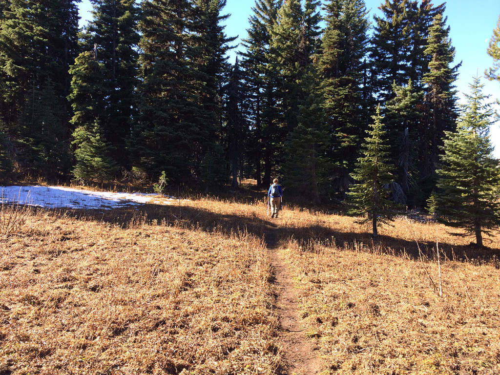 meadow_trail