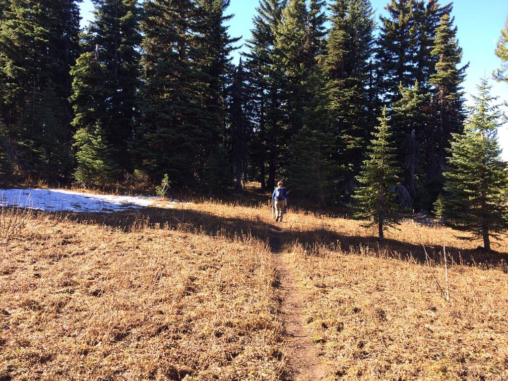 meadow_trail