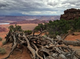Dead Horse Point corral