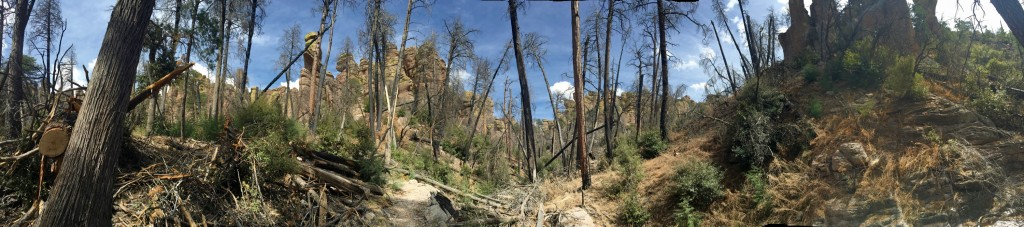 Panorama of the burn area near Echo Canyon
